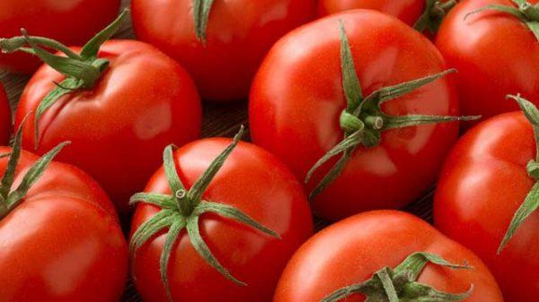 Cà chua nên chọn những quả căng mọng